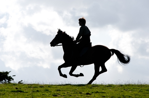 War Horse 4