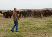 to-the-wonder-rachel-mcadams-horses